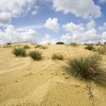 AFGELAST - Nationaal Park in een notendop: Duinengordel