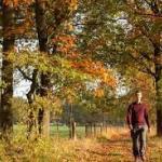 Vroege herfstwandeling (kleur Munsterbos)