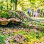 Natuurfotografie: Fibonacci en de natuur van Kattevennen