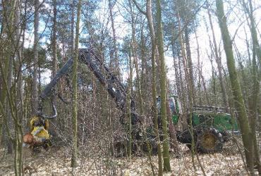 Hinder bij bosexploitatie Kattevennen