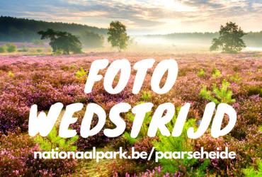 Paarse Heide: wandelroutes + fotowedstrijd